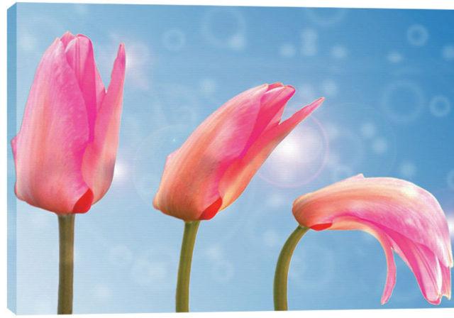 modart_obraz_na_platne_moderni_umeni_0011_tulip-1320559