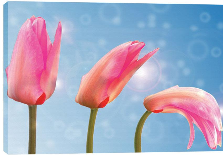 Obraz na plátně - Tulipány 100 x 70 cm - 1699 Kč