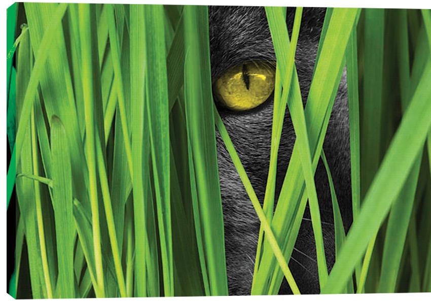 Obraz na plátně Cat 100 x 70 cm - 1699 Kč