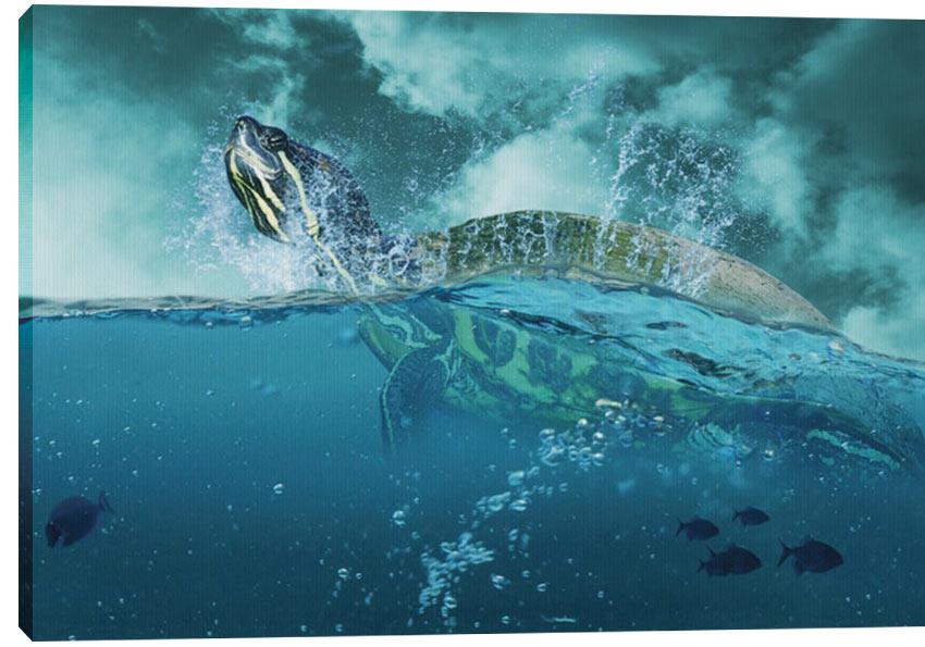 Obraz na plátně - Turtle 100 x 70 cm - 1699 Kč