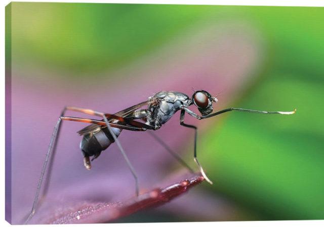 modart_obraz_na_platne_moderni_umeni_0033_insect-1130497